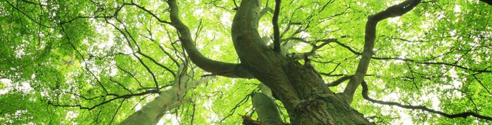 Tree cover Header