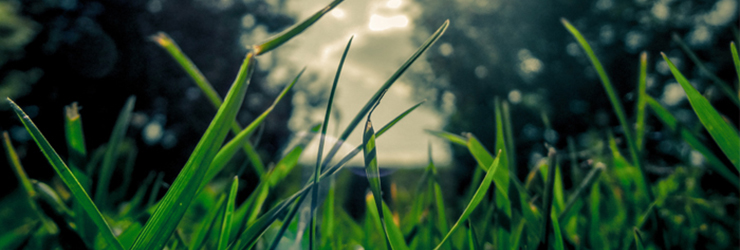 grass header image